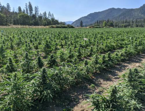 Hemp 'made in Extremadura', a region that seeks to become a benchmark in the sector in Europe